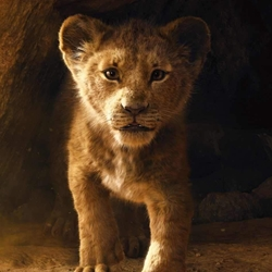 """Já conheces o novo """"Rei Leão""""?"""