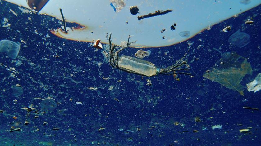 Escuteiros e guias recolhem 16,5 toneladas de lixo em praias e zonas ribeirinhas