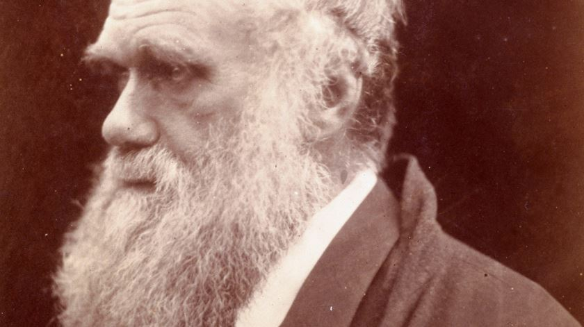 Darwin confessa não acreditar em Jesus, numa carta a um jovem advogado. Foto: DR