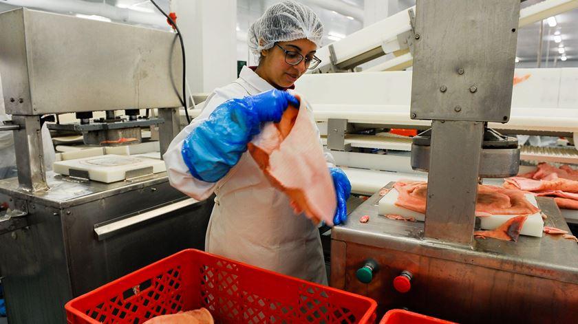 Confirmados 40 casos de infeção por Covid-19 em três fábricas de carne no Montijo