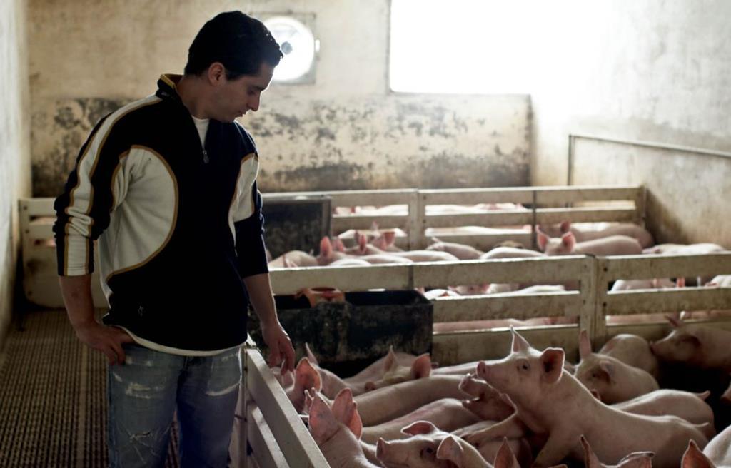 Agricultores têm até 2027 para se adaptarem às novas regras. Foto: Paulo Cunha/Lusa