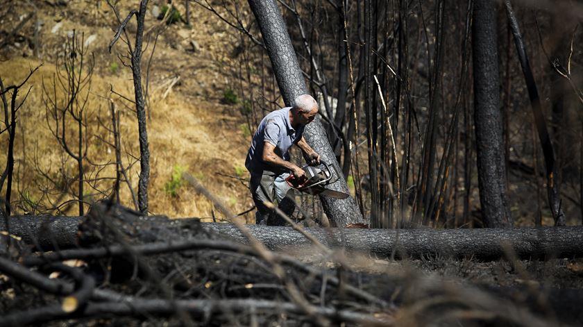 A serração ficou com 600 hectares de terrenho com árvores queimadas