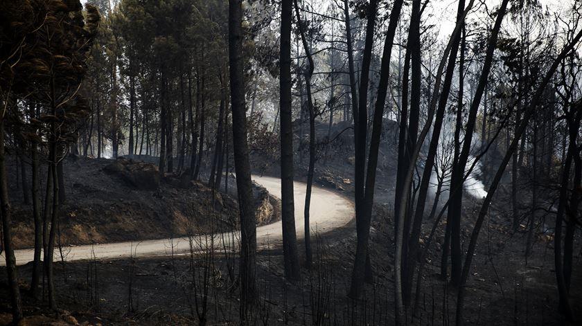 Comissário europeu assume que UE falhou na ajuda ao combate aos incêndios em Portugal