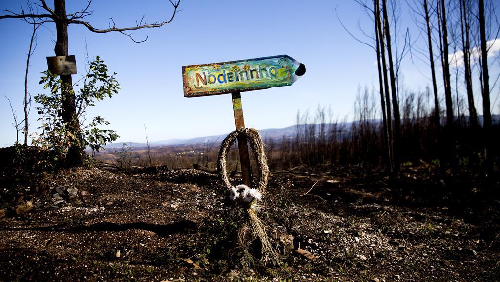 Imagem da floresta seis meses após o incêndio de Pedrógão Grande. Foto: Joana Bourgard/RR
