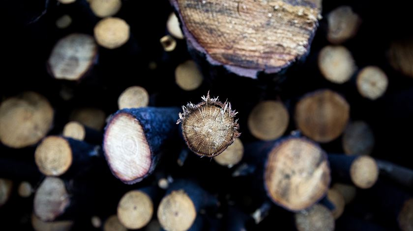 Terceiro leilão de madeira ardida rende 2,85 milhões de euros