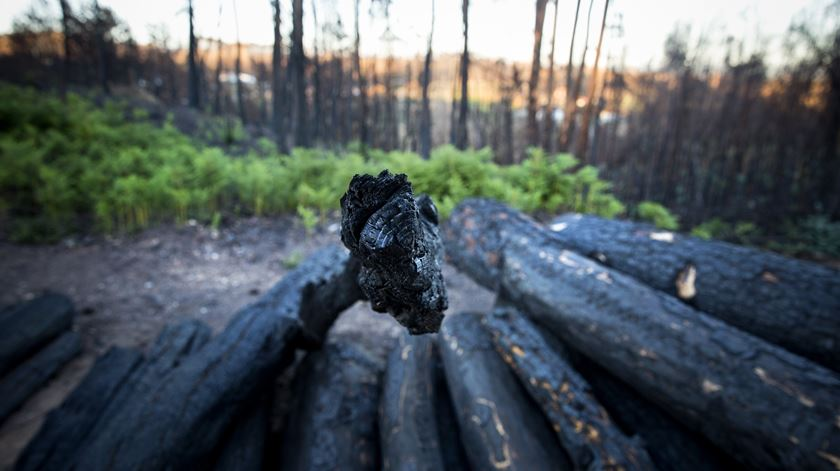Governo diz que os fundos europeus para fogos serão aplicados integralmente nos prejuízos