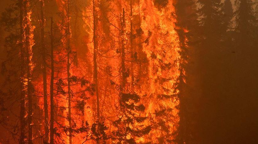 As chamas consumiram mais de seis mil hectares de floresta na região de Willow, no Alasca. Foto: Reuters