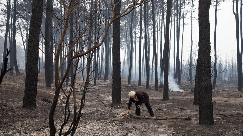 Fogo no Pinhal de Leiria. Acusada de queimada começa a ser julgada esta quinta-feira