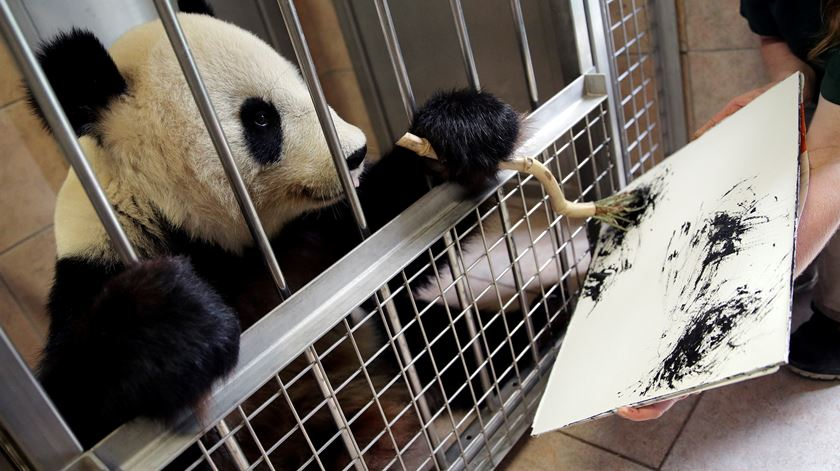Zoo de Viena tem um panda pintor (e com quadros à venda)