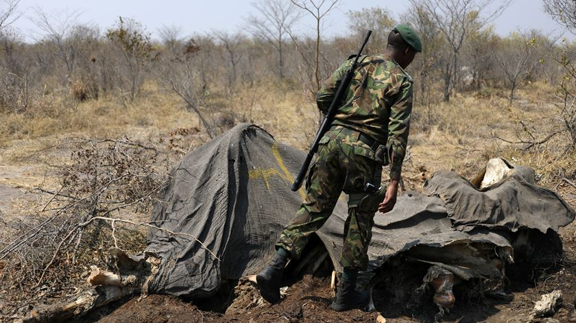WWF. Famoso grupo de conservação da natureza suspeito de financiar milícias acusadas de homicídio e tortura