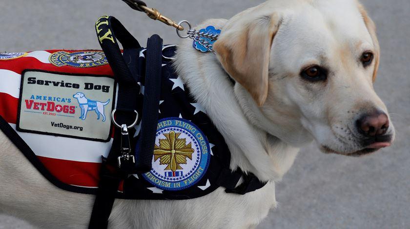 """Sully, o cão de George Bush, tem """"novo trabalho"""""""