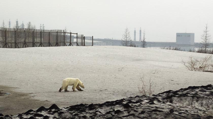 Temperatura recorde de 38 graus no Círculo Polar Ártico