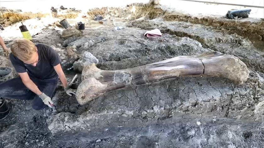 Encontrado osso de dinossauro com dois metros de comprimento em França