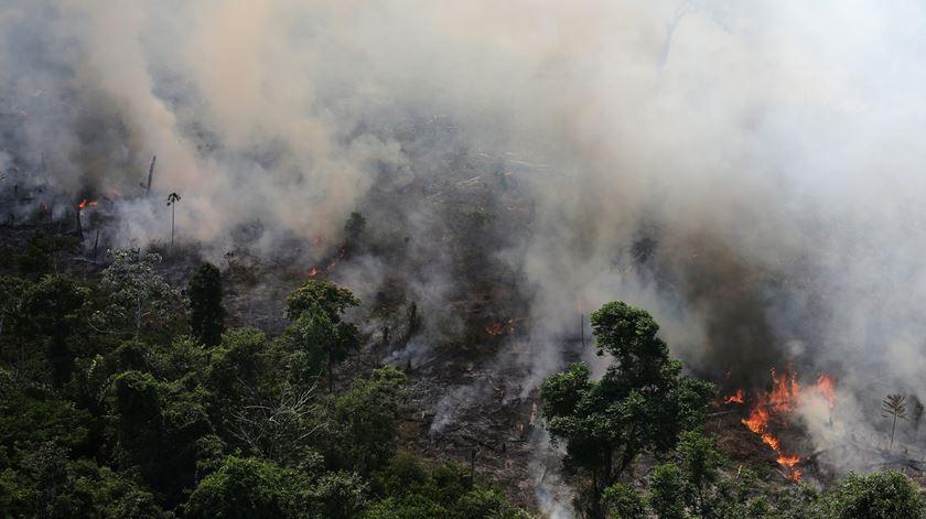 Fotogaleria. Amazónia não é o único lugar do mundo a arder