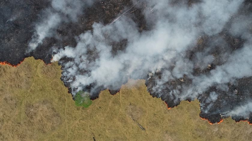 Amazónia pode deixar de ser um dos ecossistemas ecológicos mais importantes