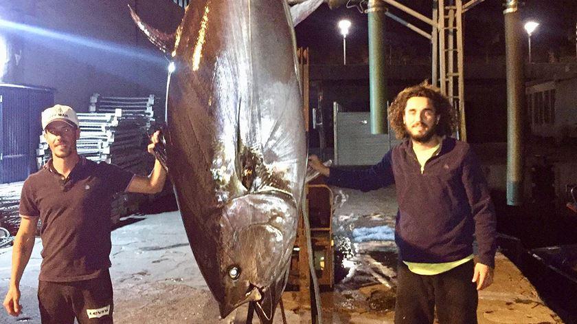 O maior especialista português vivo em atum