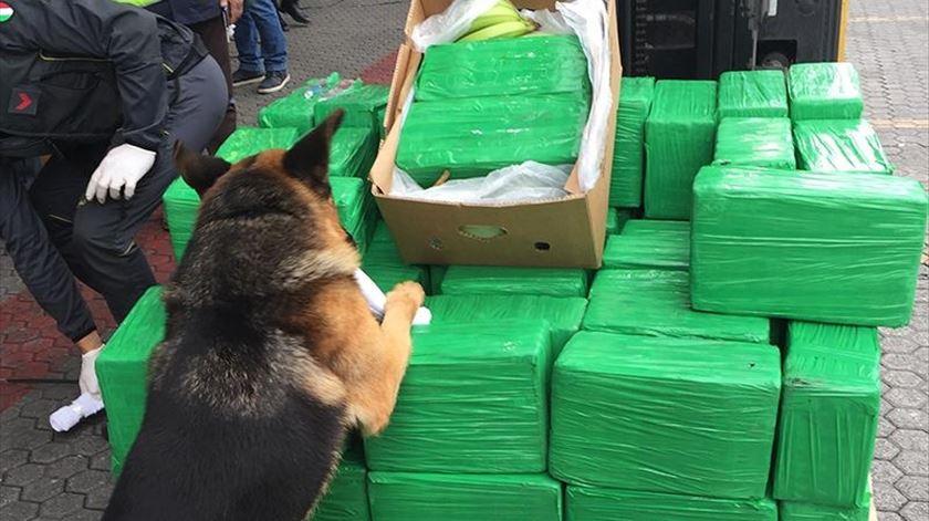 Itália apreende mais de mil quilos de cocaína escondidos em caixas de bananas