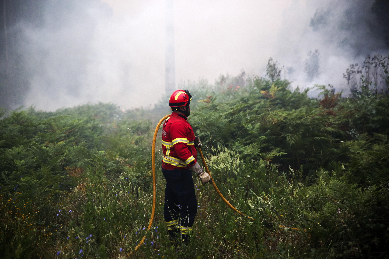 Secretário das Florestas admite incluir bombeiros na prevenção de incêndios