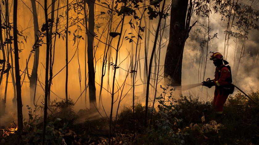 GNR identifica homem suspeito de atear fogos em Cinfães