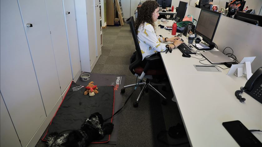 Animais no local de trabalho? 67% dos portugueses aprovam