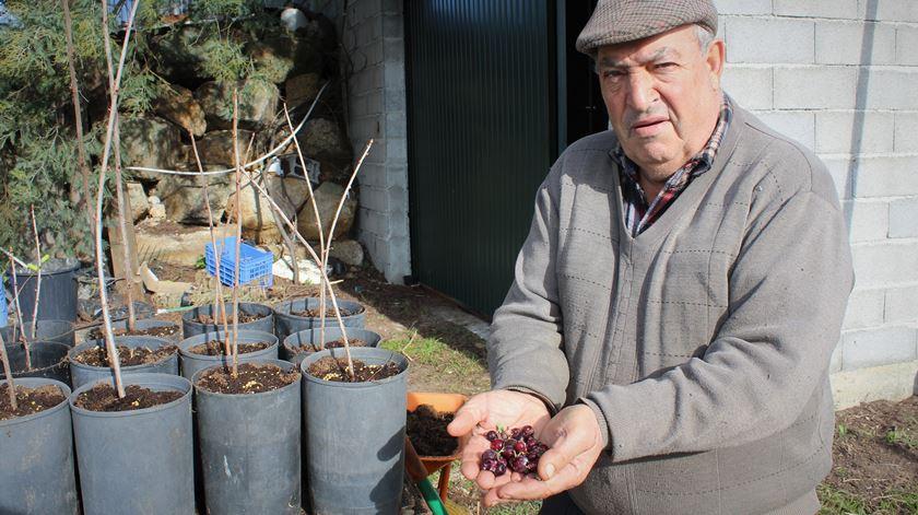 Agricultor dedica-se à produção de frutos tropicais na Serra da Estrela