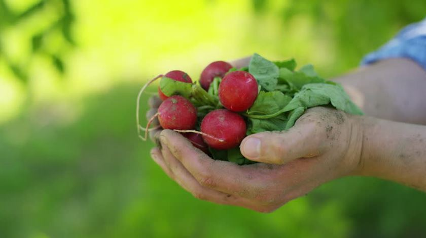 65% dos portugueses dizem que só consomem produtos biológicos