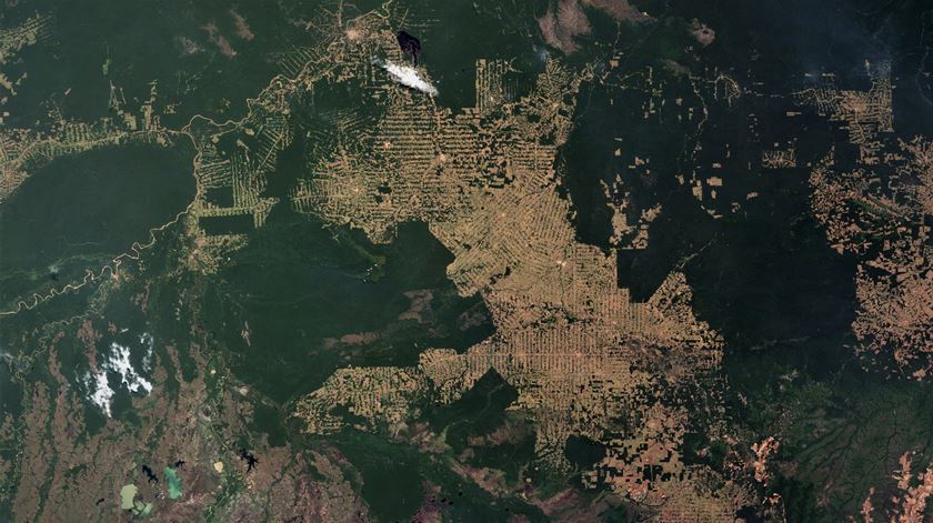 Brasil perdeu 500 mil quilómetros quadrados de vegetação natural em 18 anos