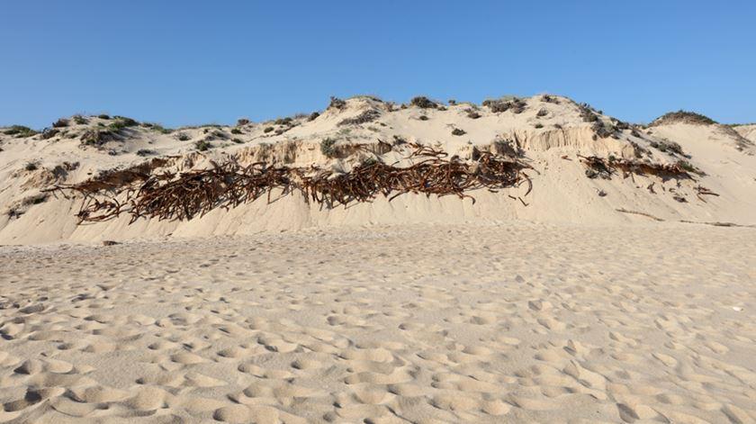 Descobertas duas antigas armações de pesca na costa do Algarve