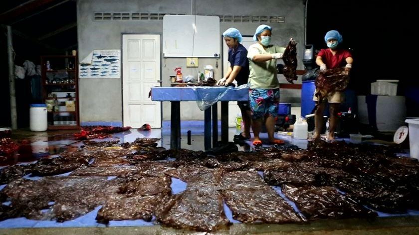 Baleia morre na Tailândia depois de engolir 80 pedaços de plástico