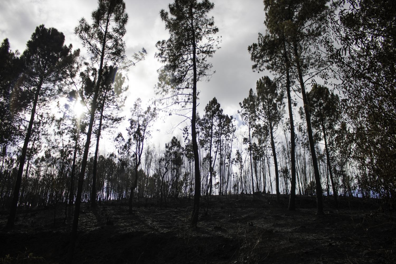 Proteção Civil registou 100 fogos este sábado