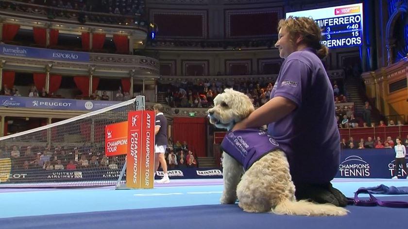 Neste torneio de ténis, os apanhadores de bolas são cães