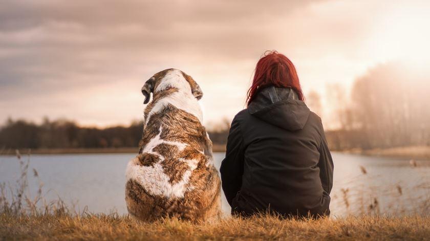 Um cão que se comporta como o dono? A resposta pode estar no ADN