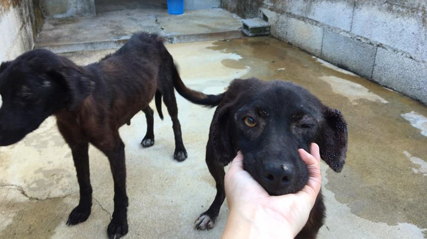 Grupo de trabalho vai delinear estratégia nacional para animais abandonados. Foto: Associação dos amigos dos animais de Santo Tirso/Facebook