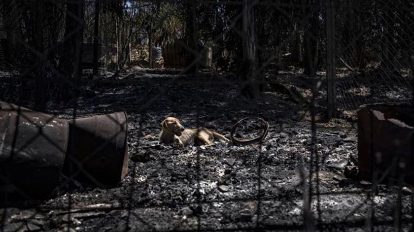 """Associação da GNR diz que militares """"não podem ser bode expiatório"""" no caso dos canis"""