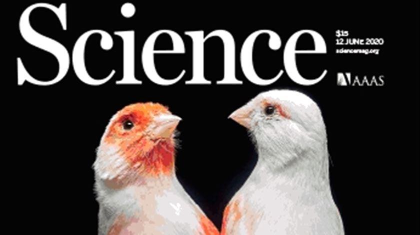 Descoberta da Universidade do Porto sobre aves é capa da revista Science