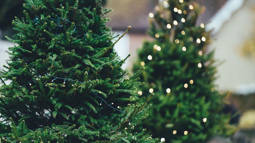 Portugueses alugaram 4.300 pinheiros no último Natal, o dobro do ano anterior