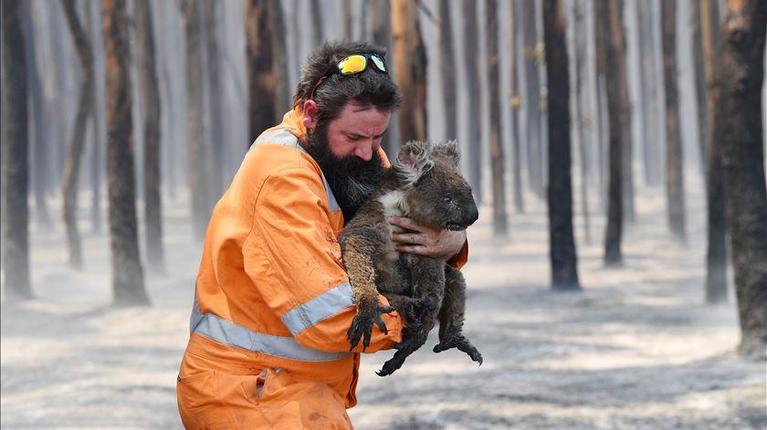 Austrália em chamas. 24 pessoas e mais de mil milhões de animais já morreram