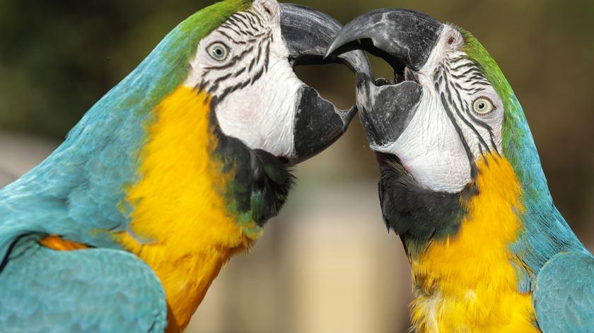 Ovos apreendidos a traficantes dão origem a aves exóticas no Zoo de Lisboa