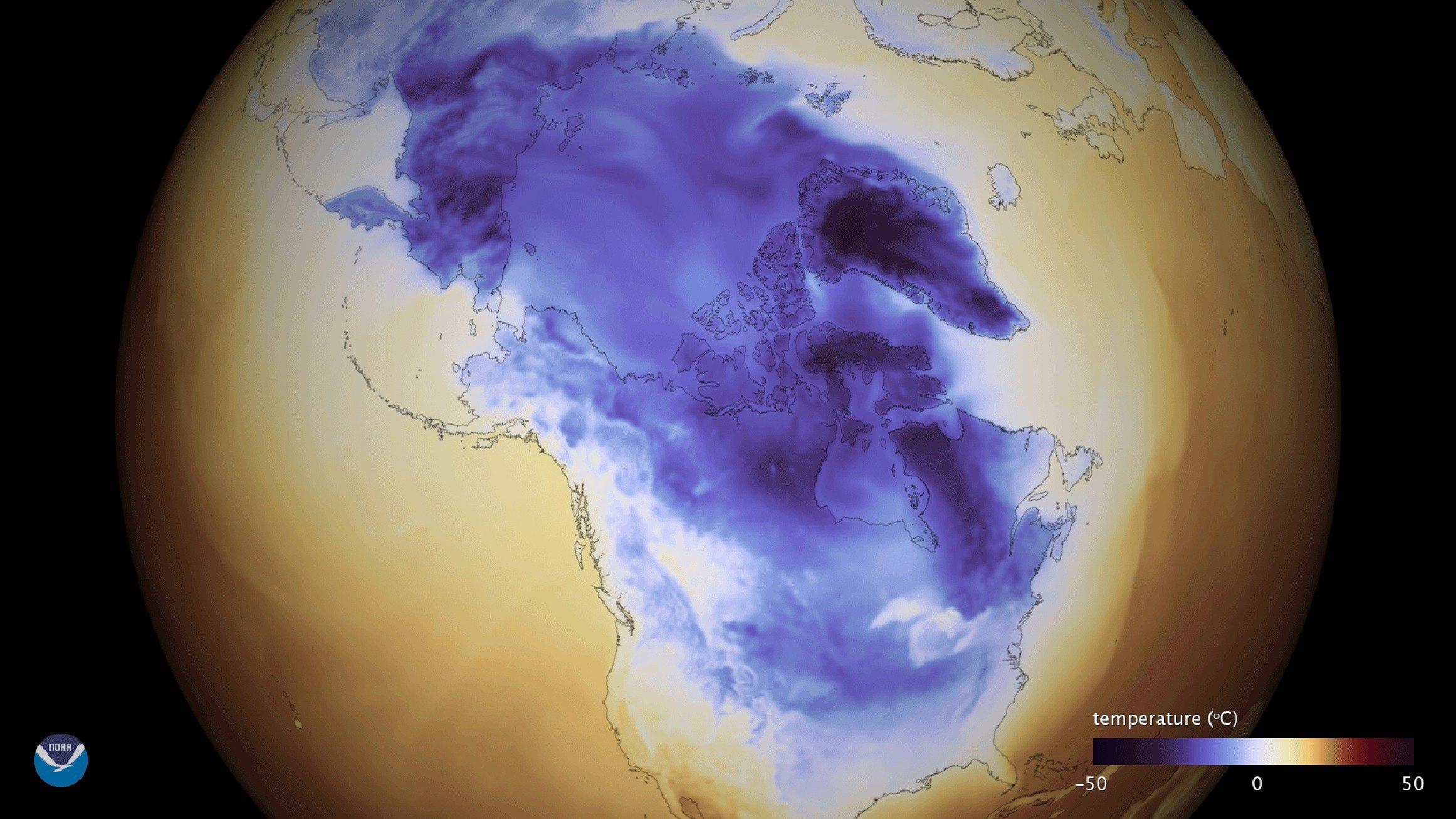 Frio extremo mata e congela tubarões nos Estados Unidos