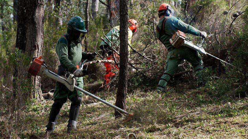 """Relatório aponta """"deficiências técnicas"""" em nova lei sobre gestão da floresta"""