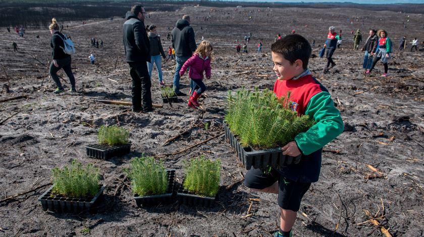 """Incêndios. Já foram """"instaladas"""" mais de um milhão de árvores no Pinhal de Leiria"""