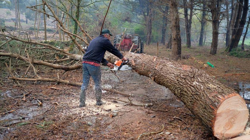 Limpeza de terrenos florestais tem de estar concluída até 31 de março
