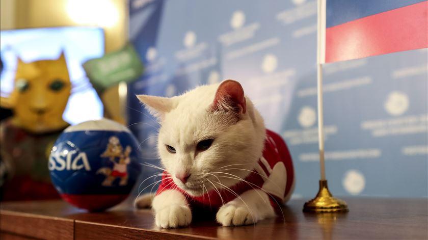 Depois do polvo, o gato. Achilles tenta adivinhar quem vai ganhar o Mundial