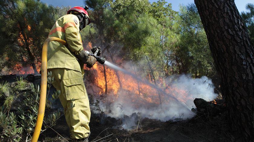 Área ardida diminuiu em 2018. Consumidos 43.532 hectares e detidas 149 pessoas