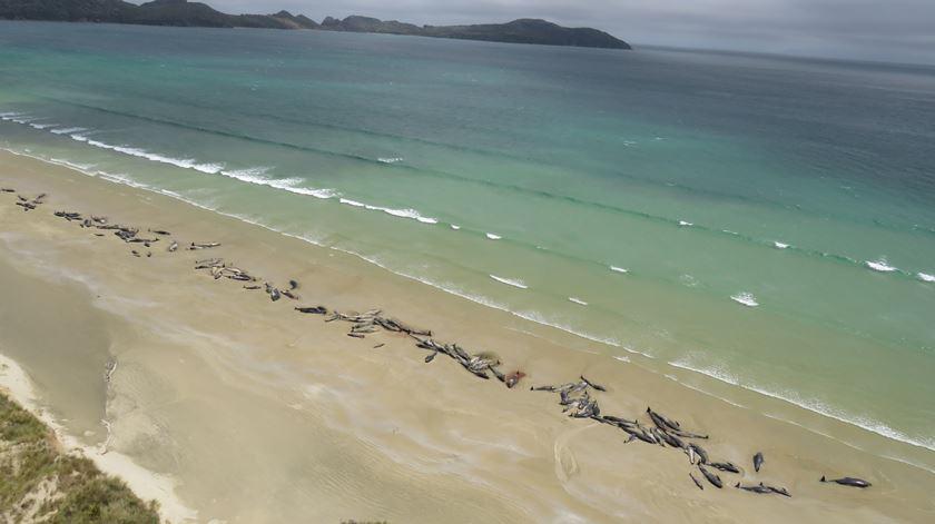145 baleias morreram numa praia da Nova Zelândia
