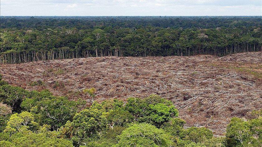 Deflorestação na Amazónia. Foto: Marcelo Sayao/EPA