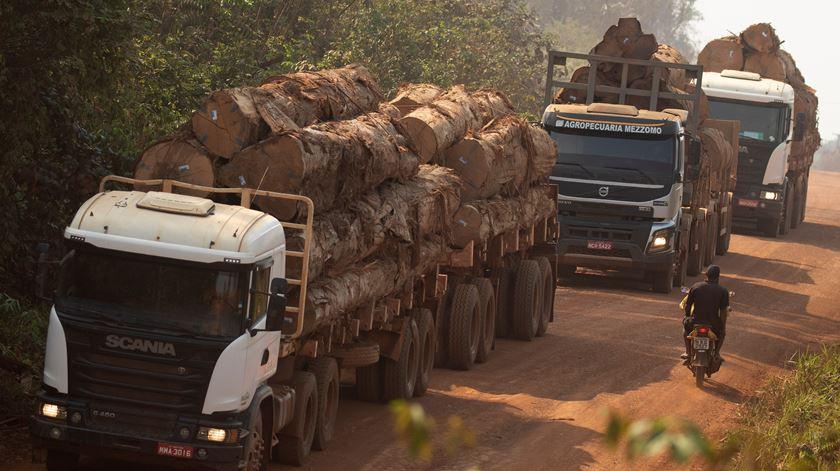 Brasil deve aumentar emissão de poluentes este ano devido à desflorestação