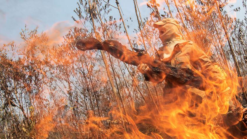 """""""Crime organizado"""" é responsável por desflorestação na Amazónia"""