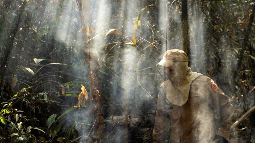 """Carlos Guanziroli. """"As pressões da indústria podem salvar a Amazónia"""""""