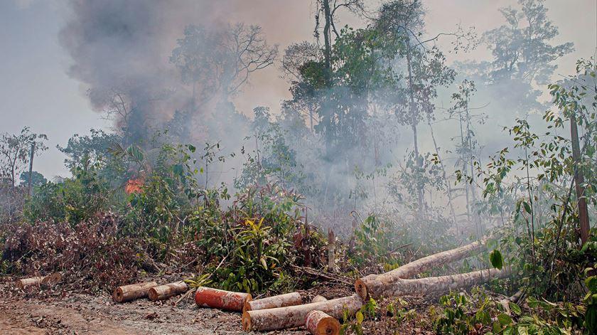 Amazónia. Número de queimadas já ultrapassa total de 2019